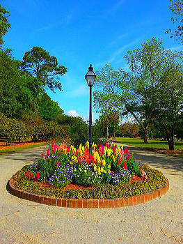 A Clear Colorful Park's View by Joetta Beauford