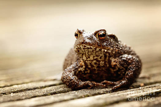 LHJB Photography - A close-up of a true toad