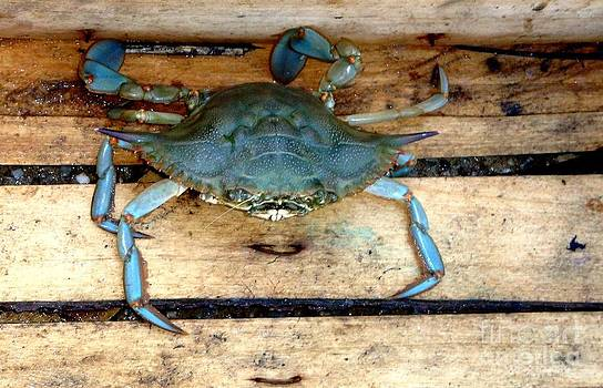 A crab in a wooden box by Olga R