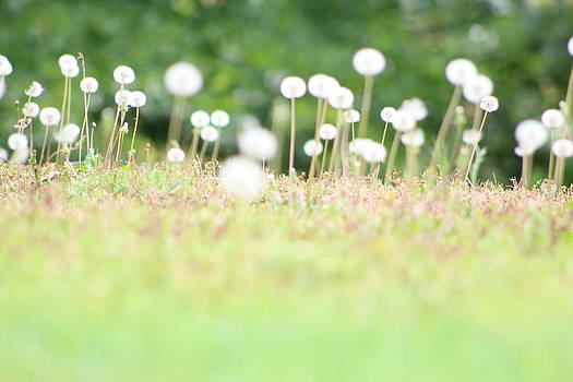 A Dandy Summer by Janet Wagstaff