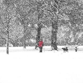A Dash of Red by Karin Ubeleis-Jones