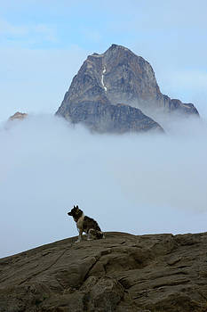 A Dog On A Rock In Tasiilaq, Greenland by Raul Touzon