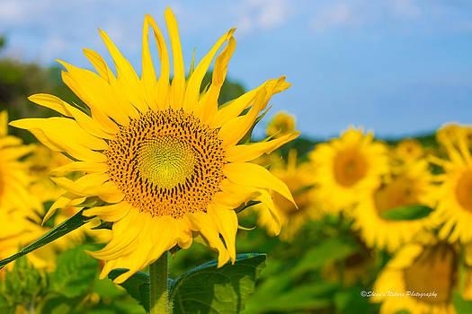 A Dose of Sunshine by Sheen Watkins