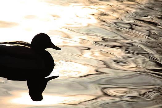Karol Livote - A Ducks Dark Side