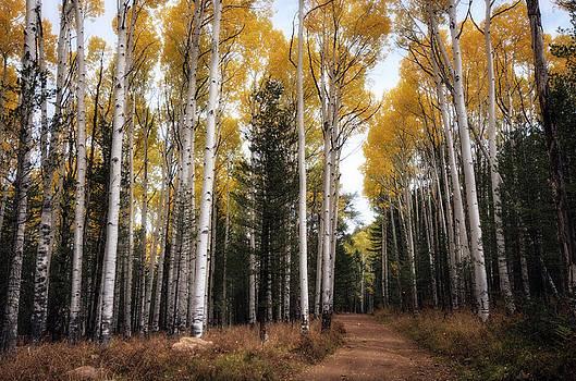 Saija  Lehtonen - A Fall Path