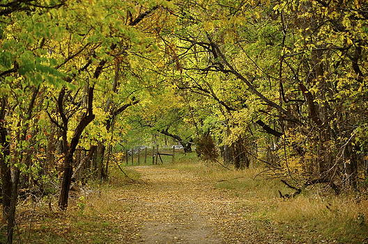 A fall road by Cherie Haines