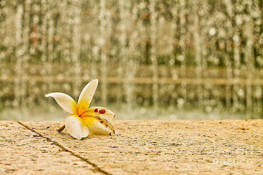 A flower in the rain by Luciana Couto