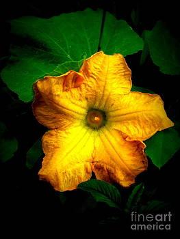 A Flower of a Squash by Alex Blaha