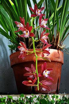 A Flower Pot by Eva Thomas