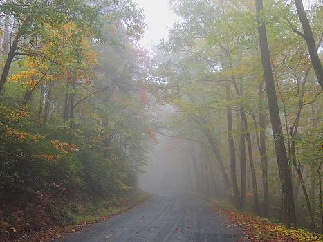A Foggy Drive by Judy  Waller