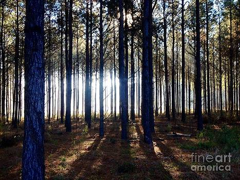 A Forest of Contrast by Cindy Hudson