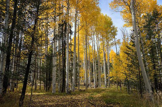 Saija  Lehtonen - A Forest Path