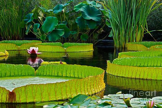 Byron Varvarigos - A Garden In Gentle Waters