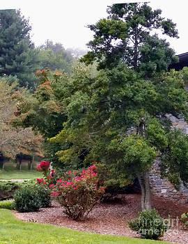 A Garden Tree by Eva Thomas