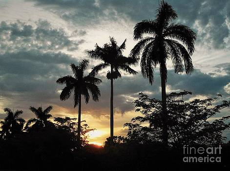 A Glowing Sunset with Palms by Debb Starr