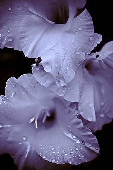 A Hint of Purple by Peggie Strachan