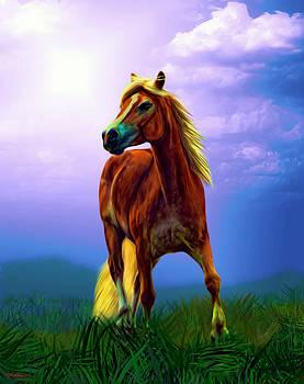 A Horse Called Sheba by Tyler Robbins