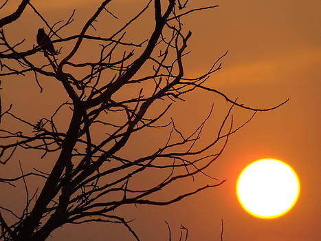 A Hummingbird Setting In A Tree At Sunset by Rebecca Cearley
