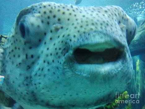 A large speckled fish by Greg Davis