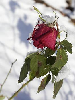 An Early Snow by Jane Eleanor Nicholas