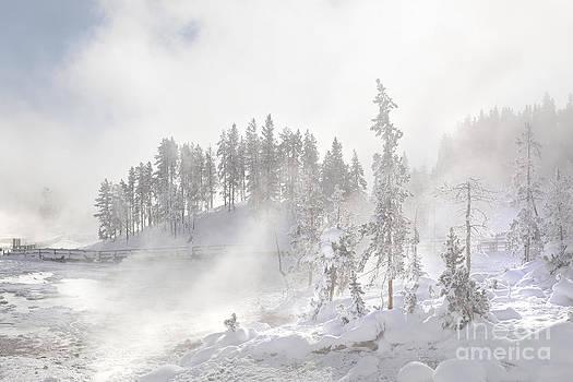 Landscape- A Luminous Winter Day by Feryal Faye Berber