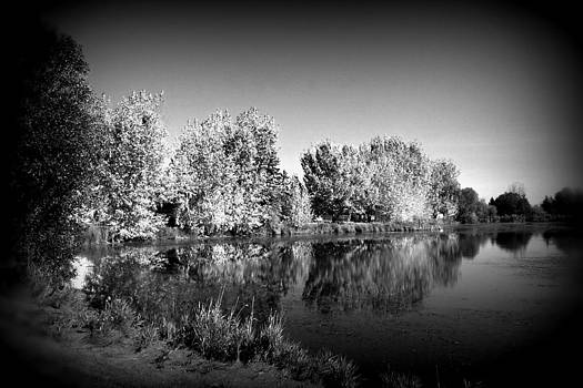 A Midsummer Night's Dream by Rose Szautner