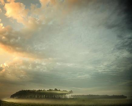 A Mist Story by Irene Suchocki