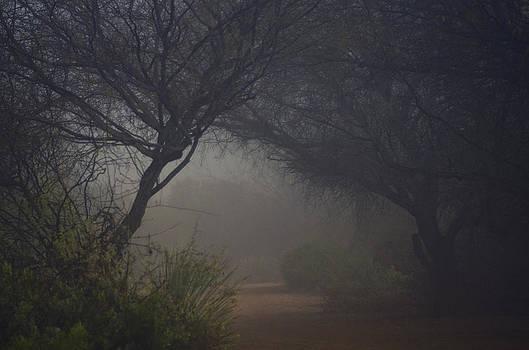 Saija  Lehtonen - A Misty Morning