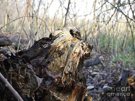 A part of tree by Stephan Kubancsik