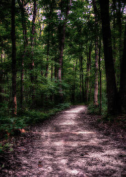 A Path in the Woods by Christopher L Nelson