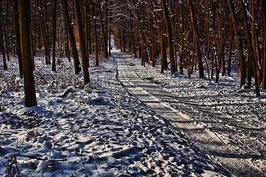 Nicole Frischlich - A path of winter