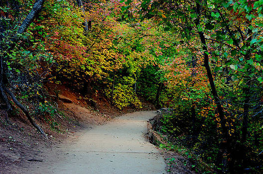 A Pathway into Fall  by Bill Zielinski