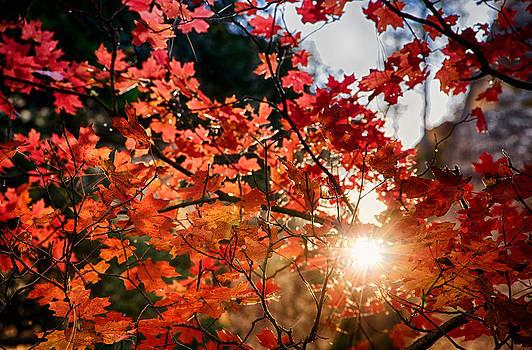 Saija  Lehtonen - A Perfect Fall Morning