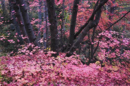 Saija  Lehtonen - A Pink Autumn
