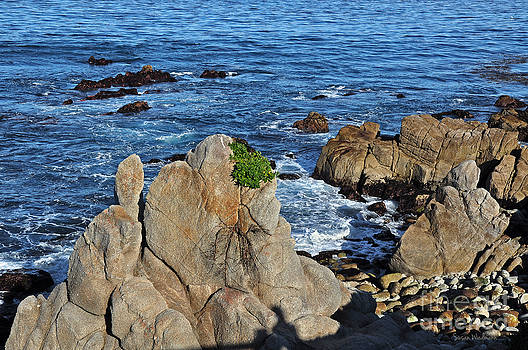 Susan Wiedmann - A Plant Grows on Ancient Seaside Rocks
