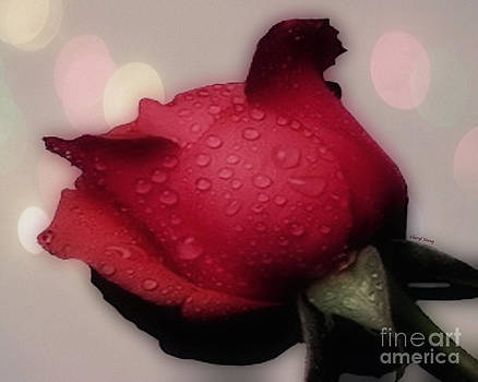 Cheryl Young - A Red Rose