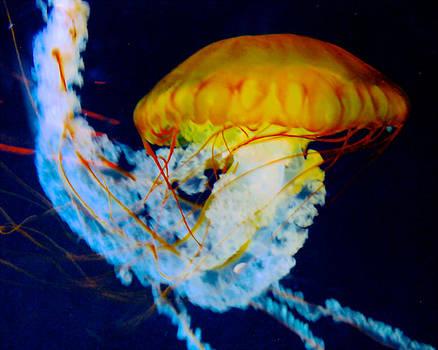 A Sea Nettle by Lisa Merman Bender