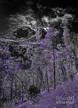 Russ Brown - A Season of Lilac