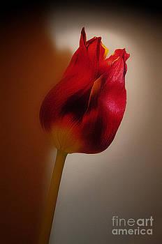 A single flower by Daniela White