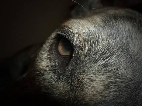 A Sleepy Dog's Eyes by Montana Wilson