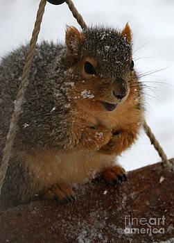 A Snowy Day by Lori Tordsen