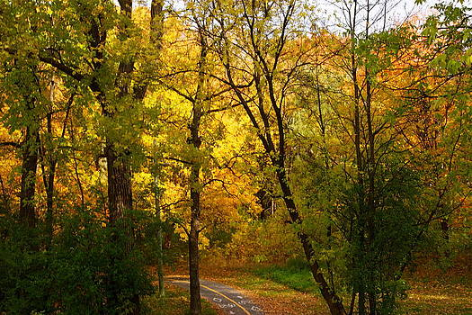 A special road by Jocelyne Choquette