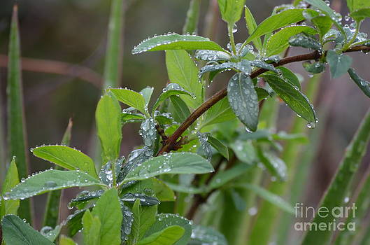 Maria Urso  - A Spring Rain - 2014
