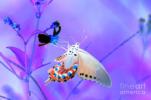 A Strange Butterfly Dream by Kim Pate