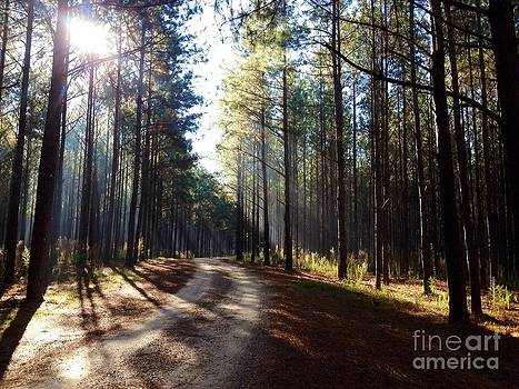 A Sun-drenched Road by Cindy Hudson