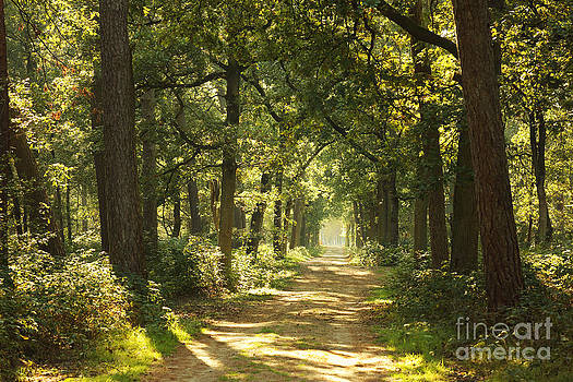 LHJB Photography - A sunny autumn day in the forest