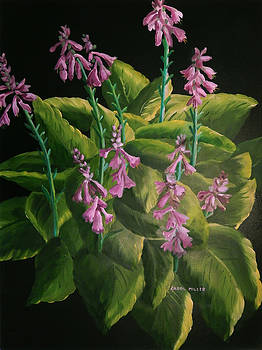 A Symphony of Hostas by Carol L Miller
