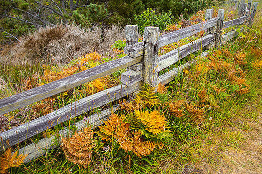 A Touch Of Fall  by Brian Williamson