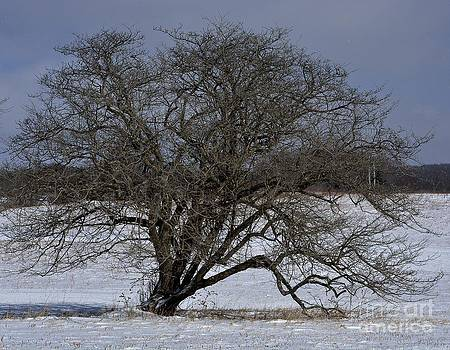 A Tree in Canaan 2 by Randy Bodkins