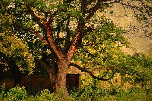 Jenny Rainbow - A Tree